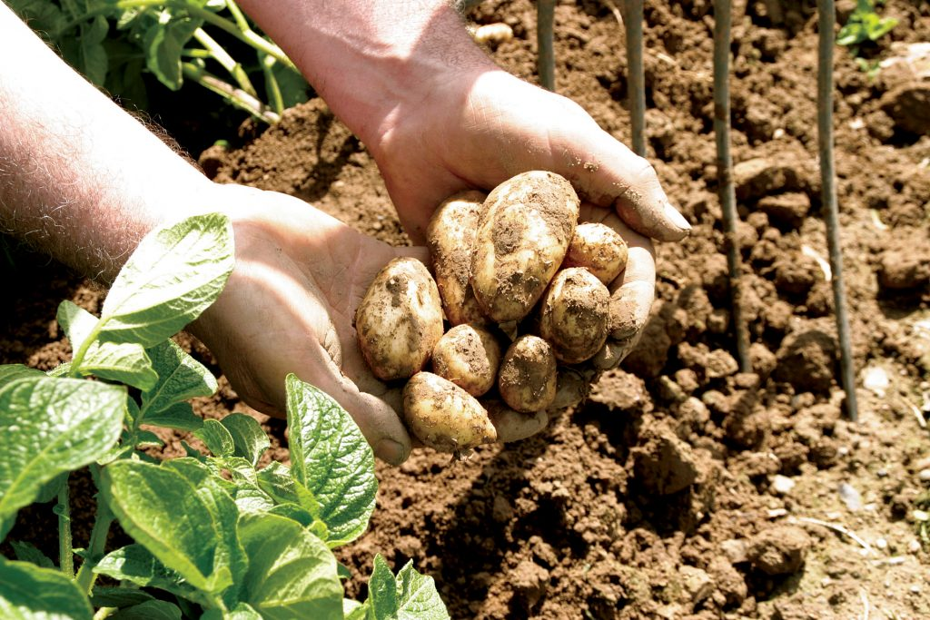 jersey royals - pinch of nom slimming world shopping essentials may
